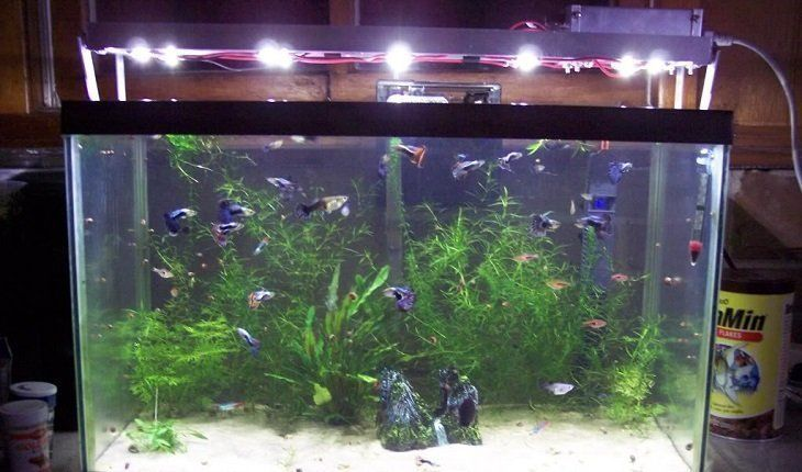 Best LED Light For Planted Tank