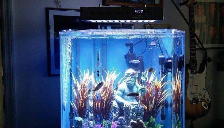 Best LED Lighting For Reef Tank