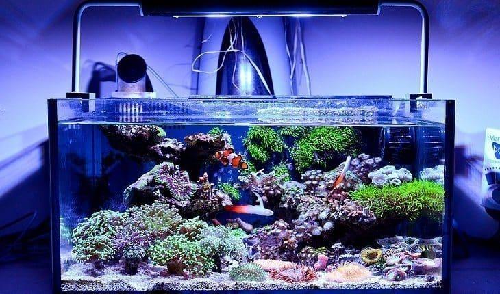 Best Nano Reef Tank