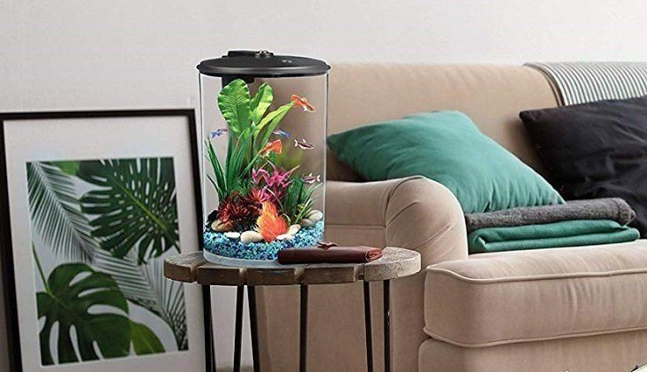Best Small Fish Tank
