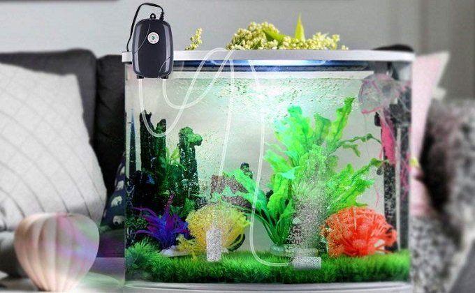 How to Buy the Best Aquarium Air Pump