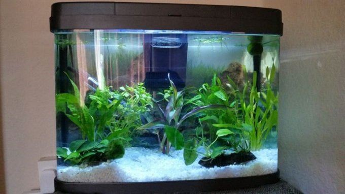 How to Buy the Best Aquarium Filter