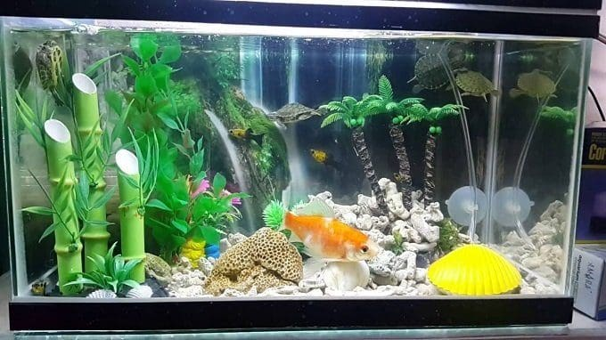 10 Best Betta Fish Tanks Reviews Buying Guide
