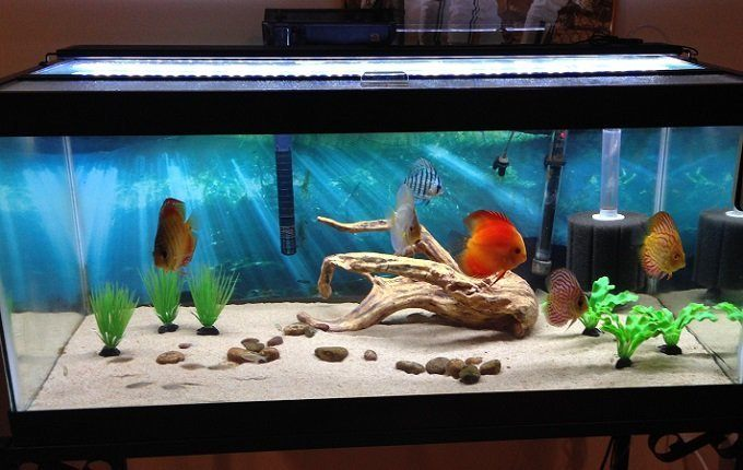 How to Buy the Best UV Aquarium Sterilizer