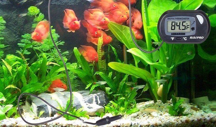Best Aquarium Thermometer