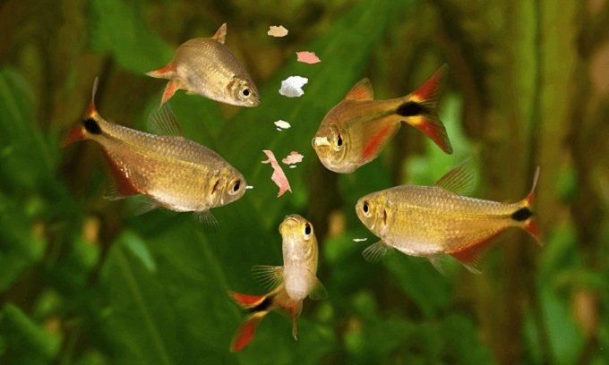 How to Buy Best Tropical Fish Food