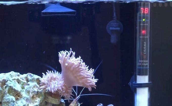 How to Buy the Best Aquarium Thermometer