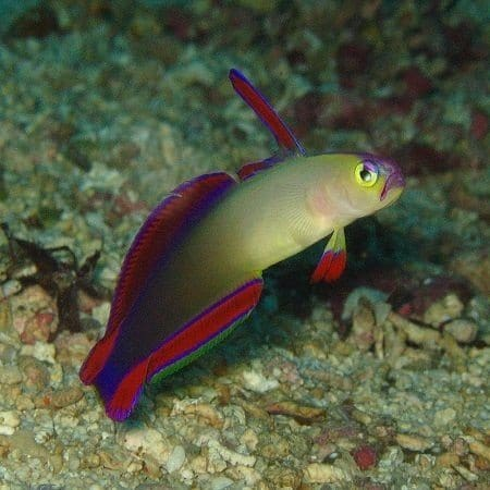 Dartfish