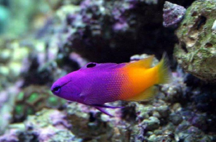 Small Saltwater Fish