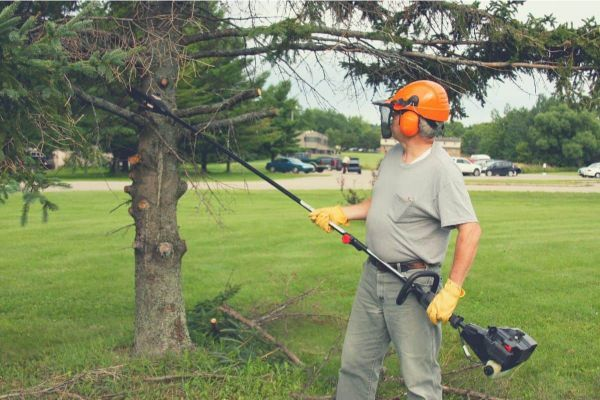 How to Buy the Best Cordless Pole Saw