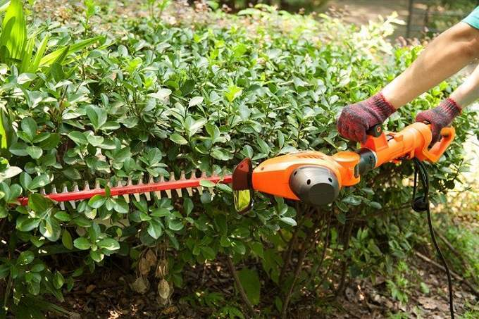 How to Buy the Best Pole Hedge Trimmer