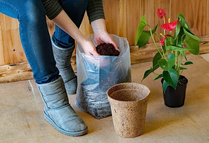 How to Buy the Best Potting Soil