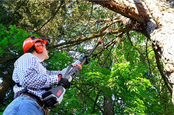 How to Use a Cordless Pole Saw
