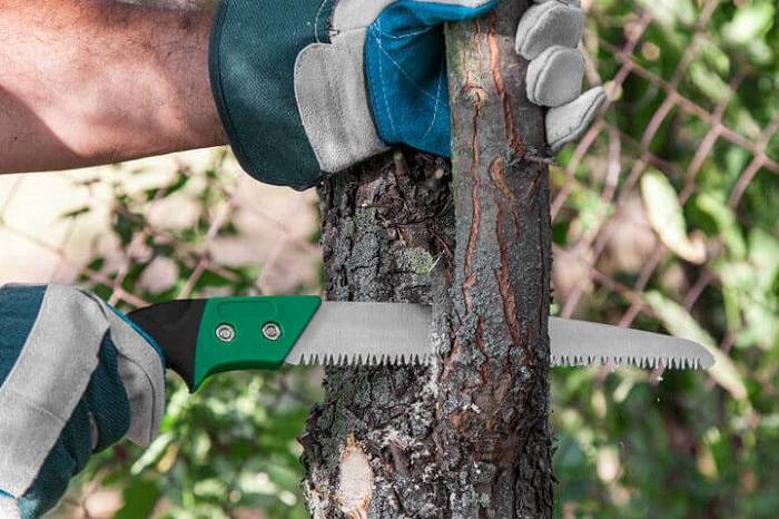How to Buy the Best Pruning Saw