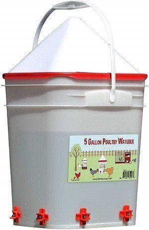 RentACoop 5-Gal Chicken Waterer