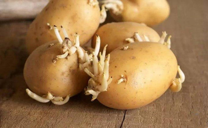 Signs If Potatoes Have Gone Bad