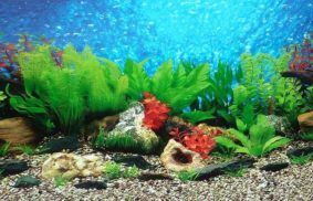 Best Aquarium Background