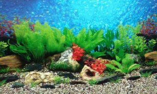 Best Aquarium Background