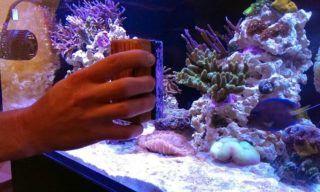Best Aquarium Magnet Cleaner