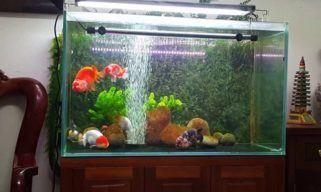 Best Goldfish Tank