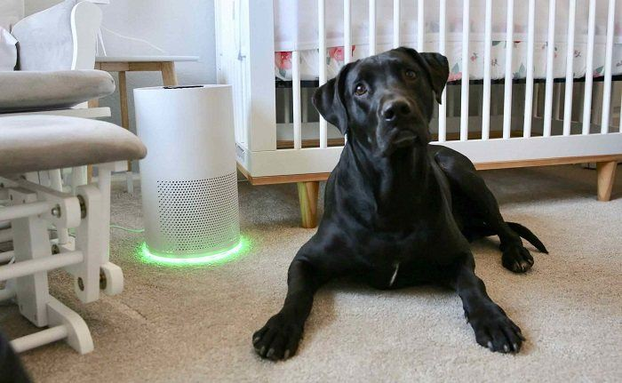 How to Buy the Best Air Purifier for Pets