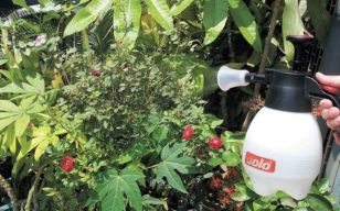 Best Garden Sprayer