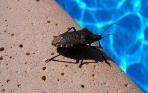 How To Get Rid Of Waterbugs In Pool