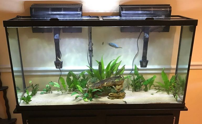 How to Clean the Small Fish Tank