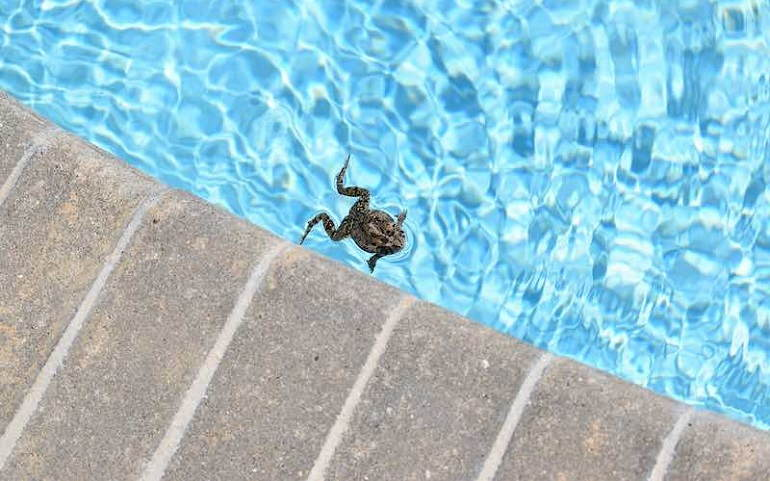 Ways To Keep Frogs Out Of Pool