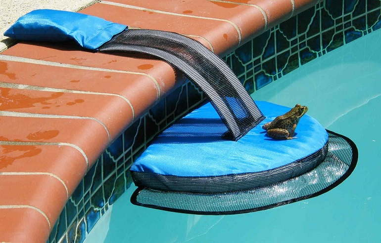 Why You Don't Want to Have Frogs in Your Pool