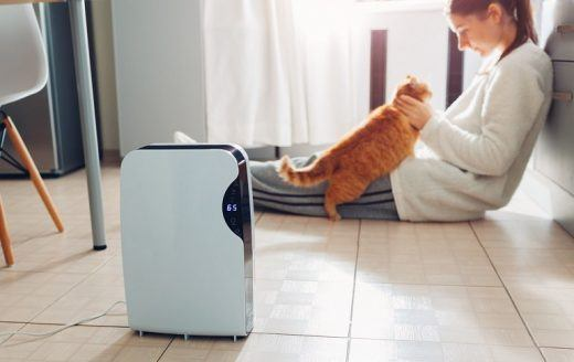 Does Air Purifier Work for Pet Odor